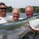 Hauraki Gulf Kingfish