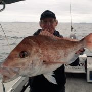 snapper and kingfish